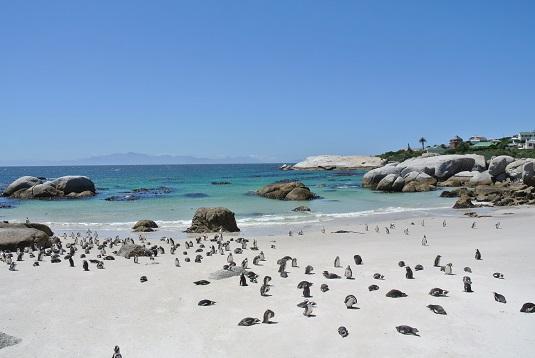 photo des Manchot du cap sur la plage de Foxy Beach, au Boulders National parc. Des centaines de Manchots du cap envahissant la plage de sable blanc. Afrique du sud Boulders beach penguin Colony