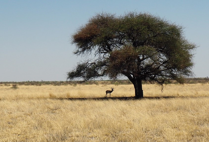 Kalahari CKGR Botswana