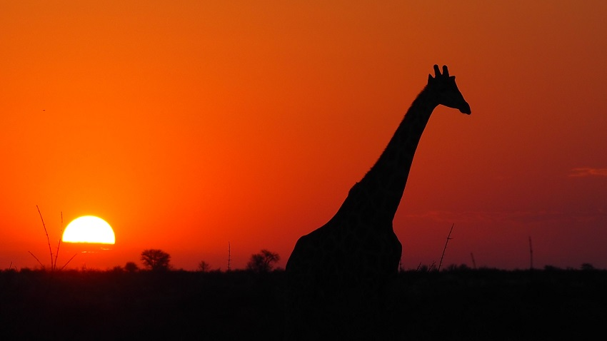 Coucher du soleil sur le CKGR le Kalahari au camp site Matopi Botswana. Photo Msiafrica.