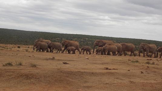 Addo éElephant Afrique du sud