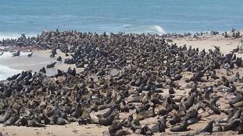 Cape Cross Walvys Bay Namibie
