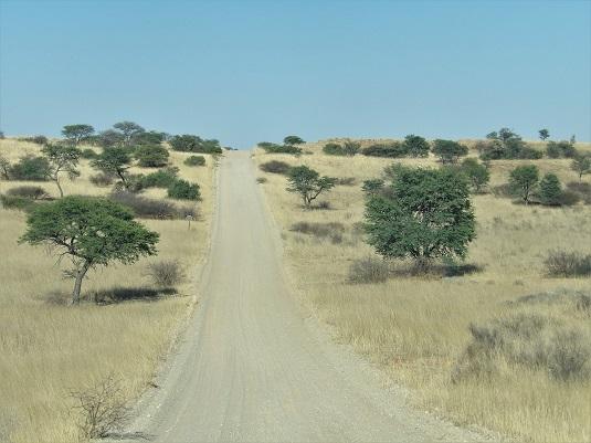 Photo msiafricaroadtrip.com  piste au KTP menant à Mata-Mata Rest Camp dans le Kalahari. Afrique du Sud