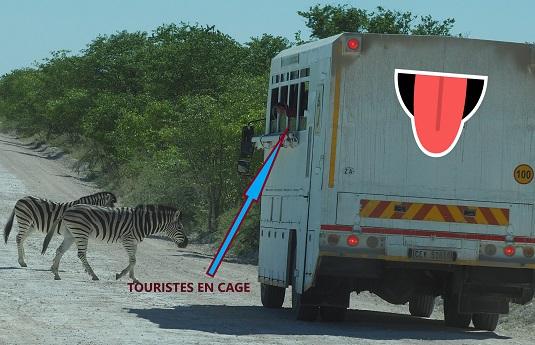 photo msiafricaroadtrip.com zébres et camion tout-terrain dans le parc national d'Etosha en namibie.