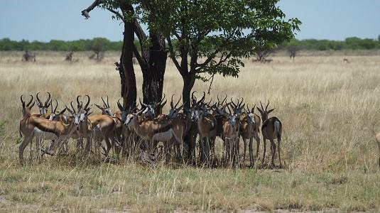 springboks KTP Afrique du Sud