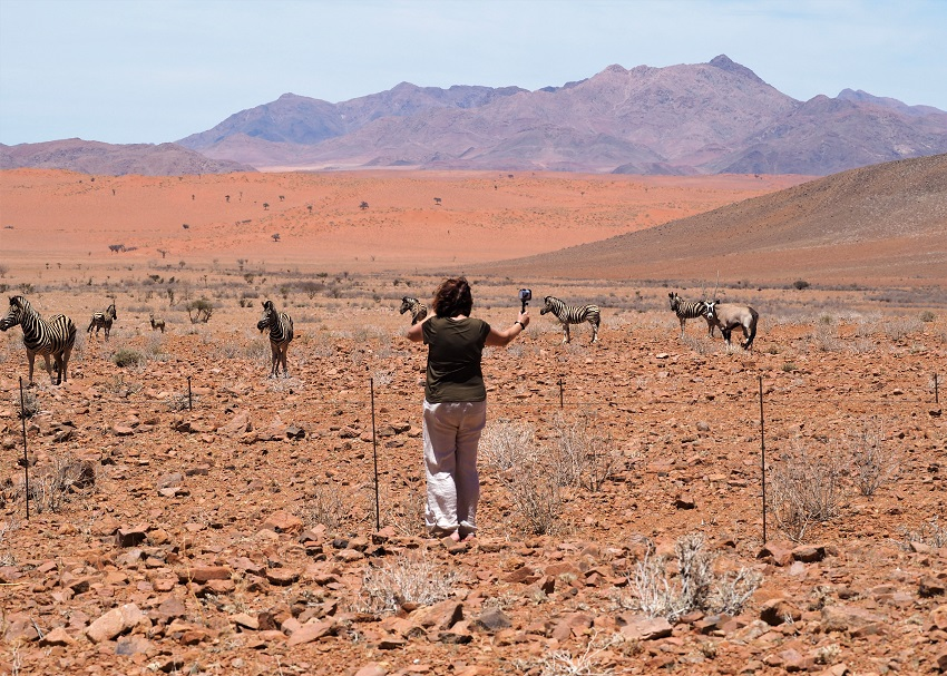 Msi en train de filmer des zébres dans le Namib en NAMIBIE