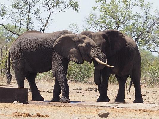 éléphants kruger afrique du sud