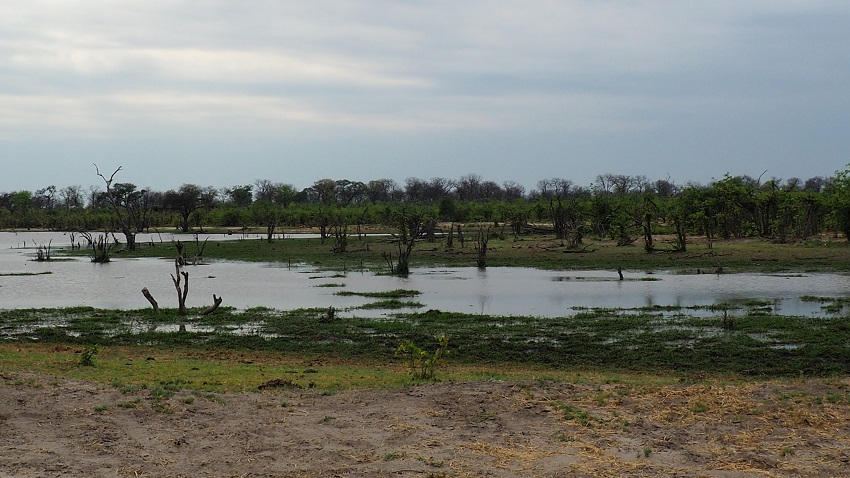 Mababe zone humide Botswana